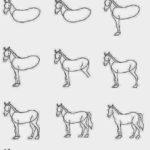 Dibijar caballo en 15 pasos